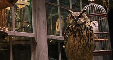 Hibou et chouette dans un magasin, image du film.