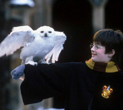 Harry et Hedwige dans ES/f