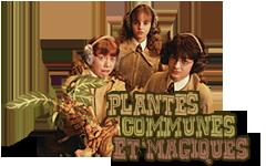 Plantes communes et magiques